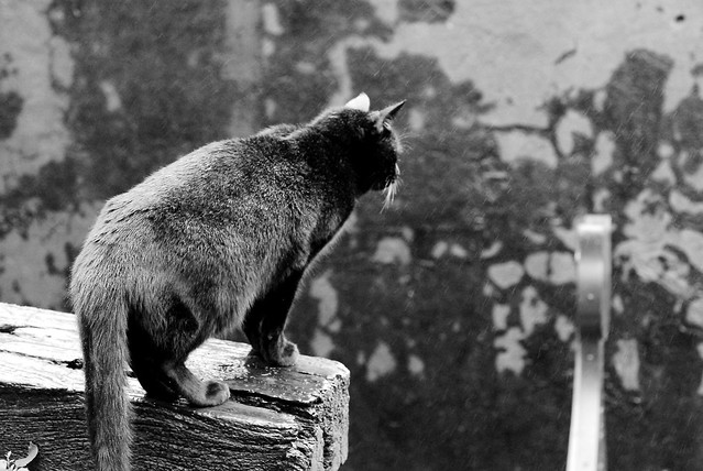 cat in the rain essay cat in the rain ernest hemingway