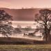 Misty South Shropshire by Tim Gardner pics