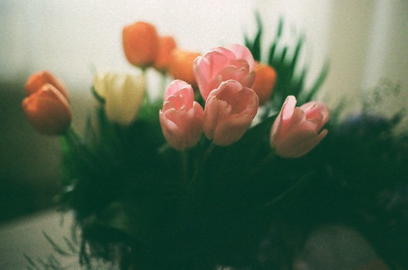 mom's tulips