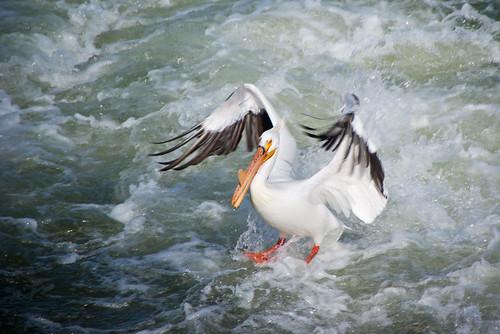 pelican splashdown