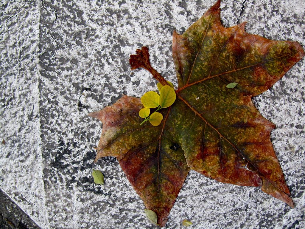 Leaf for a Print