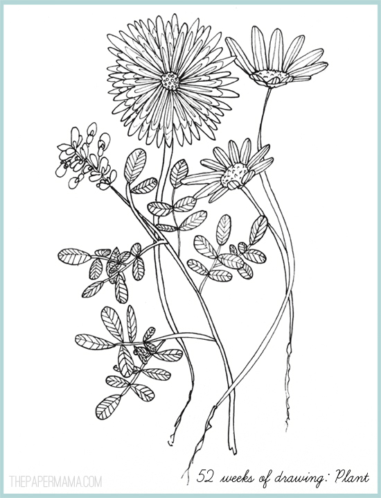 """Mustard Plant Drawing Week 3's Theme is """"plant"""" i"""