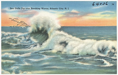 Sea gulls dip over breaking waves, Atlantic City, N. J.
