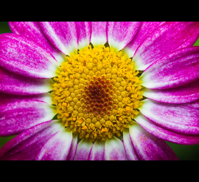 IMAGE: http://farm9.staticflickr.com/8213/8417465792_cd60a1c08f_z.jpg