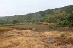 除草劑使用過後的農地。
