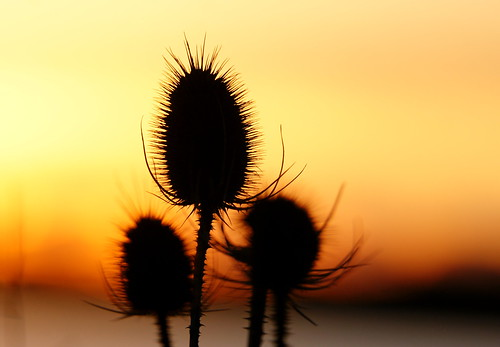 uk winter light sunset sky sun 3 colour beauty silhouette three focus dof bokeh group dorset trio february shape spikes poole stevemaskell teasels 2013 holesbay