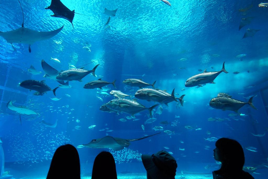 美ら海水族館DSC04642