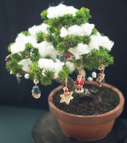 Christmas Bonsai!_1