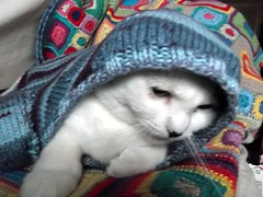 Cat in the Hood(ie)