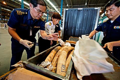 在泰國查扣的非洲象牙。泰國是全球最大且不受管制的象牙市場。(WWF提供,James Morgan攝)