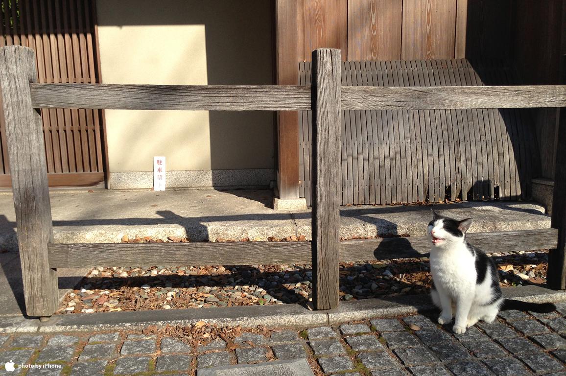 番猫|日牟禮八幡宮
