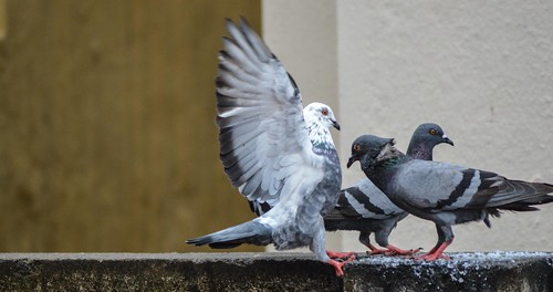 Hey Birds ! Don't fight !! by Pugalenthi Iniabarathi