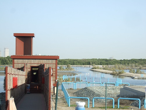 Ras al Khor and Flamingoes
