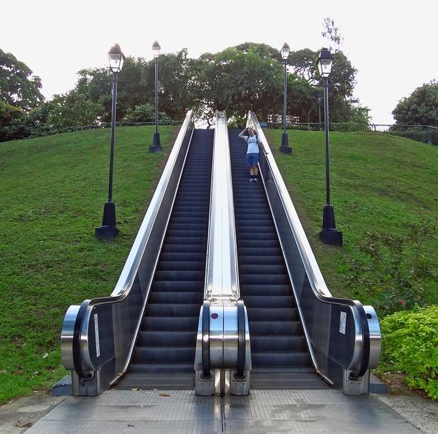 Singapore oddity