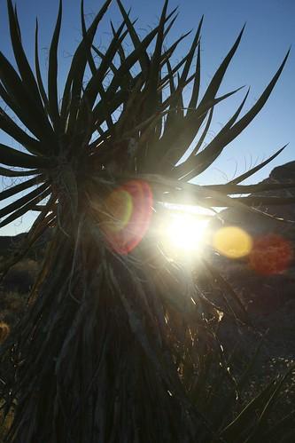 1.1 - Desert Winterlight