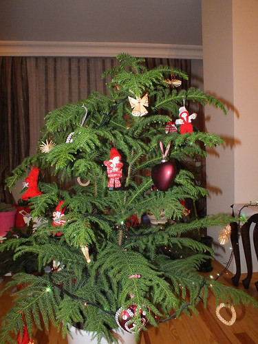 Karácsonyfa/páfrány