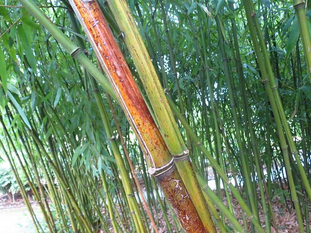 The Bamboo Garden