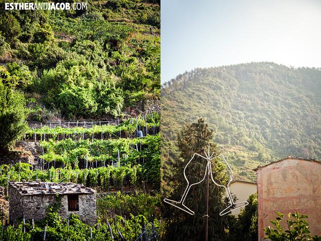 wine and vineyards in Corniglia | Cinque Terre Italy | Travel Photography
