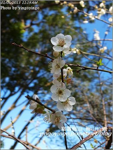 嘉義梅山_梅山公園20130106_R0071416
