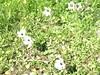 Kreta 2007-1 018