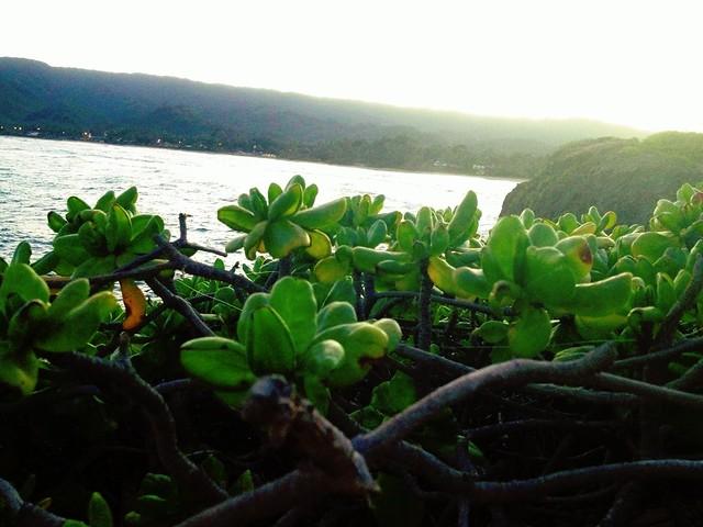 plant sunset