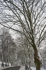 Snow 19th Jan 2013