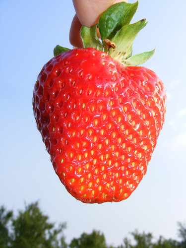 Fresh-Strawberry-Against-Blue-Sky__DSCF0690