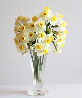 china lilies