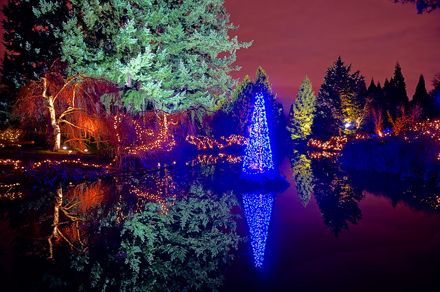 VanDusen Botanical Garden at Night During the Holidays
