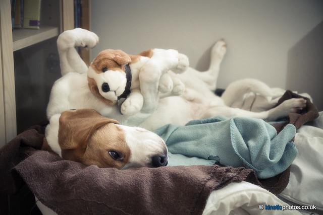 Even Big Boys Need Cuddles [IMG_4418-Edit]