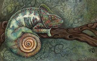 Malagasy giant chameleon, Furcifer oustaleti, Sharon Jones, http://sharonjones38.daportfolio.com/