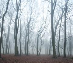 Fog in Dockey Wood