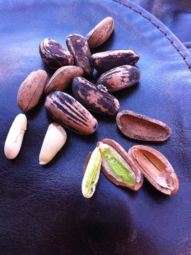 Pinus pinea - stone pine nuts