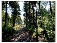2011-06-06_Le chemin près du Mont-Mézenc