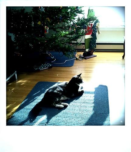 Christmas Cat (151)