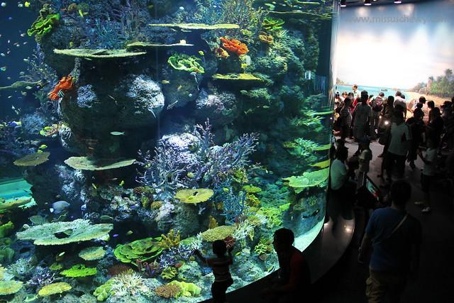 RWS S.E.A Aquarium 659