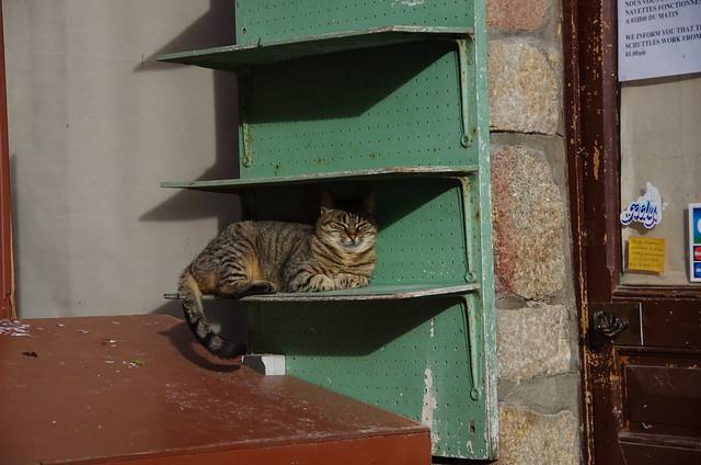 ひなたぼっこ猫@モンサンミッシェル