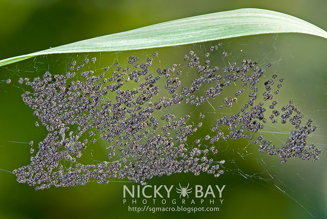 Spiderlings - DSC_0085