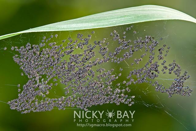 Spiderlings - DSC_0085