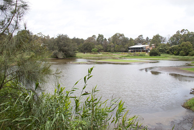 Newcastle wetlands