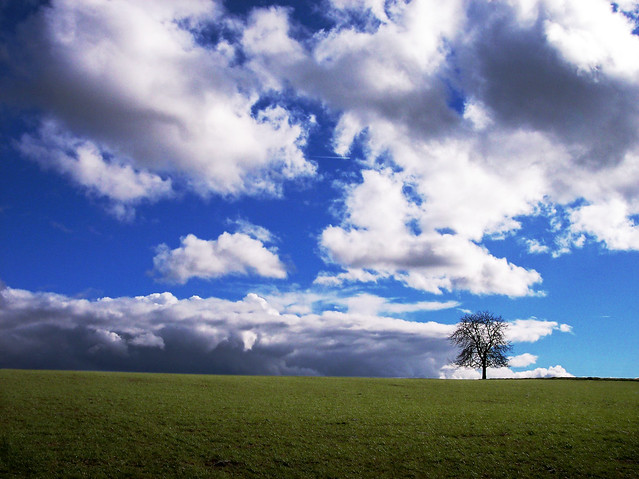 Tree on hilltop