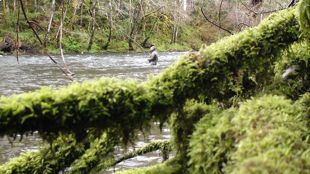 Fishing the Sol Duc