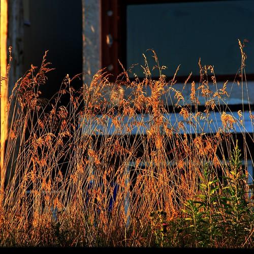 houses light urban window grass sunshine rural doors explore