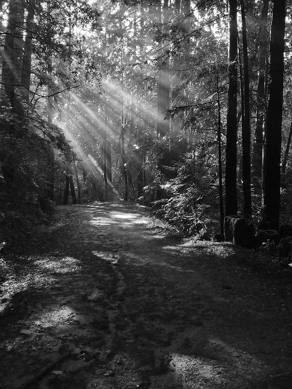 Forest of Nisene Marks