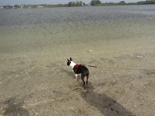 charlie at florida beach 2012 (7)