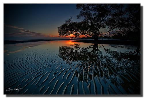 trees reflection sunrise australia brisbane queensland ripples hdr nudgeebeach graduatedndfilter 1740f40l hitechfilters oloneophotoengine canon5dmklll
