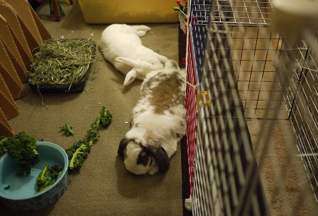 bunnies lounging