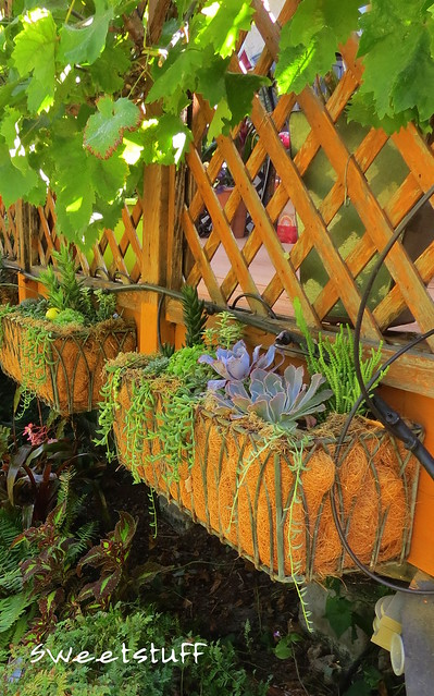 Hanging bed covered by grape vines