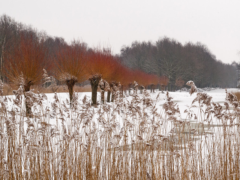 Winter in the Netherlands 4