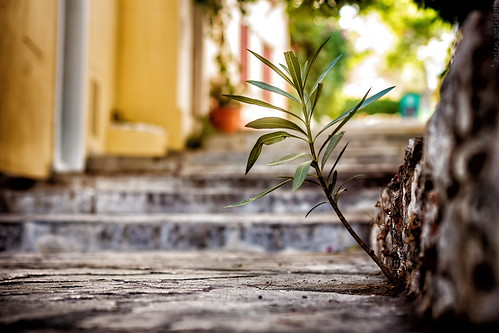 street plant canon island published dof steps greece sidewalk curb canonef50mmf14usm canoneos40d depthoffieldcloseup ayearofpictures2013